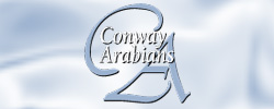 Conway11