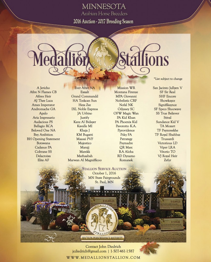 medallion-stallion-last-chance-2