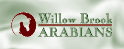 Willow Brook Arabians